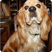 Adopt A Pet :: Bobby Jack - Sugarland, TX