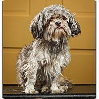 Adopt A Pet :: Lucky - Owensboro, KY