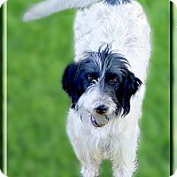 Adopt A Pet :: Snoppers sweet girl - Sacramento, CA
