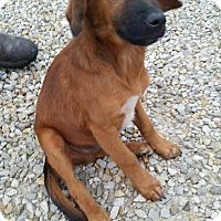 Adopt A Pet :: Kip - Huntingburg, IN