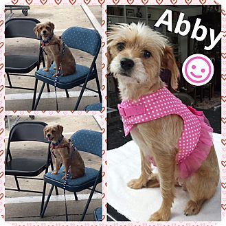 Terrier (Unknown Type, Small) Mix Dog for adoption in Brownsville, Texas - Abby