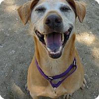 Adopt A Pet :: Leola - Grayslake, IL