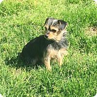 Adopt A Pet :: Kai - Indian Trail, NC