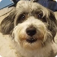 Adopt A Pet :: Aurora - Detroit, MI