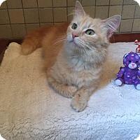 Adopt A Pet :: Pippy - Albany, NY