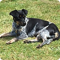 Adopt A Pet :: GYPSY-ADOPTED!! - Lynnwood, WA