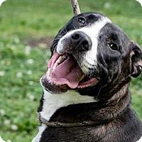 Adopt A Pet :: GUCCI - Terre Haute, IN