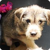 Adopt A Pet :: I'M ADOPTED Peanut