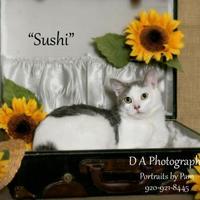 Adopt A Pet :: Sushi - Fond du Lac, WI