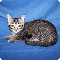 Adopt A Pet :: K-Jenny3-Jolene - Colorado Springs, CO