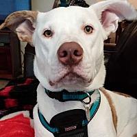 Adopt A Pet :: Oliver - McKenna, WA