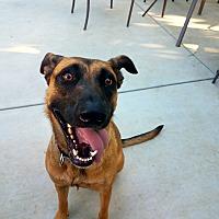 Adopt A Pet :: Gabrielle - Saugus, CA