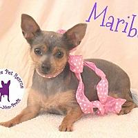 Adopt A Pet :: Maribel - Wellington, FL