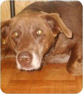 Labrador Retriever Mix Dog for adoption in little rock, Arkansas - Maisey