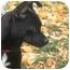 Photo 1 - Chihuahua Mix Dog for adoption in Okotoks, Alberta - Munchkin