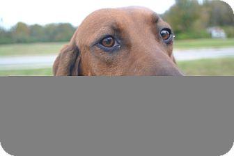 Redbone Coonhound Mix Dog for adoption in Harrisonburg, Virginia - Molly