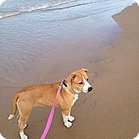 Adopt A Pet :: Mimi - Glenview, IL