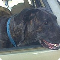Adopt A Pet :: Ginger - kennebunkport, ME