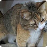 Adopt A Pet :: Samantha - Dallas, TX