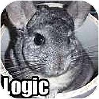 Adopt A Pet :: Logic - Virginia Beach, VA