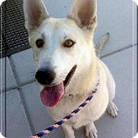 Adopt A Pet :: Zoey super URGENT - Sacramento, CA