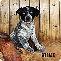 Adopt A Pet :: Willie - Austin, TX