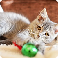 Adopt A Pet :: Libby - Xenia, OH
