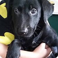 Adopt A Pet :: Badges - Gainesville, FL