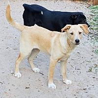 Adopt A Pet :: Paris - Danbury, CT