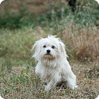 Adopt A Pet :: Barry White - Auburn, CA