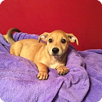Adopt A Pet :: Mango - Acworth, GA