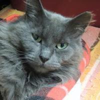 Adopt A Pet :: Aurora - Westville, IN