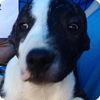 Adopt A Pet :: DAYNA - Coudersport, PA