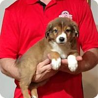 Adopt A Pet :: Mia - Gahanna, OH