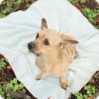 Adopt A Pet :: Skinny - Key Biscayne, FL