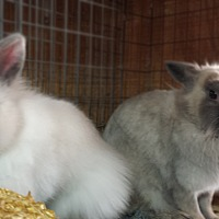 Adopt A Pet :: Cleopatra and Kesia - Williston, FL