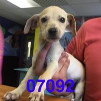 Adopt A Pet :: BOOMER - Kiln, MS