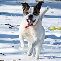Adopt A Pet :: Ziggy - South Bend, IN
