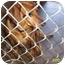 Photo 1 - Dachshund Mix Dog for adoption in Sedona, Arizona - Shayleigh