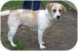 Hound (Unknown Type) Mix Dog for adoption in Summerville, South Carolina - Sad Eyes