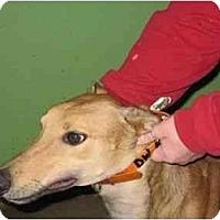 Adopt A Pet :: Chance (RWJ Hot Chance) - Louisville, KY