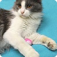 Adopt A Pet :: Lilo - Chicago, IL