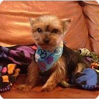 Adopt A Pet :: Charlie - Tallahassee, FL