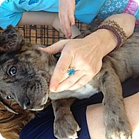 Adopt A Pet :: Jackie - North Hollywood, CA