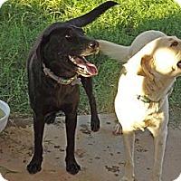 Adopt A Pet :: Ebony and Ivory - Phoenix, AZ