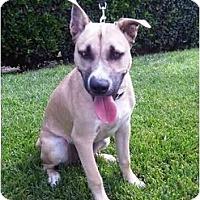 Adopt A Pet :: Moses - Los Angeles, CA
