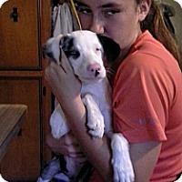 Adopt A Pet :: Possum - Silsbee, TX