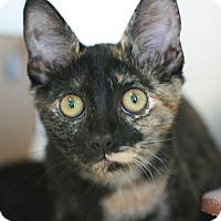 Adopt A Pet :: Twinkle - Canoga Park, CA