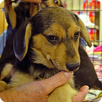 Adopt A Pet :: Charlie - Pittstown, NJ