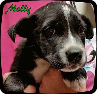 Labrador Retriever Mix Puppy for adoption in Ahoskie, North Carolina - 9P-Molly
